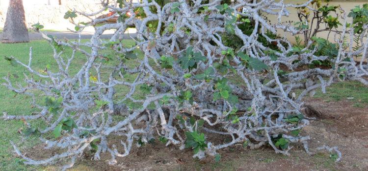 A Barren Tree